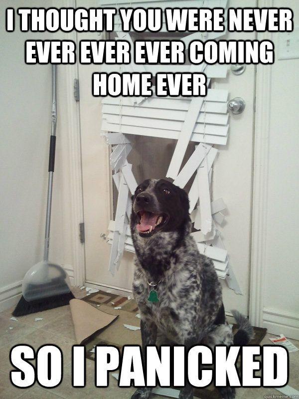 Bad Dog or Bad Human