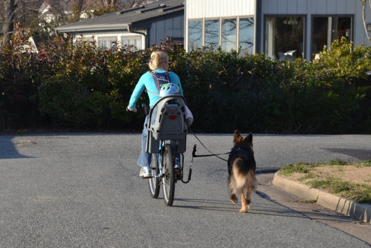 Biking with Dog