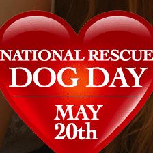 Rescue dog promo