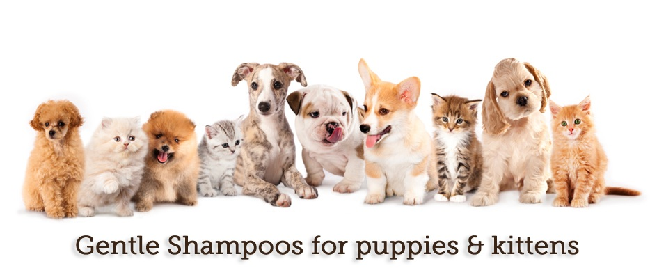 Gentle Puppy Kitty Shampoo